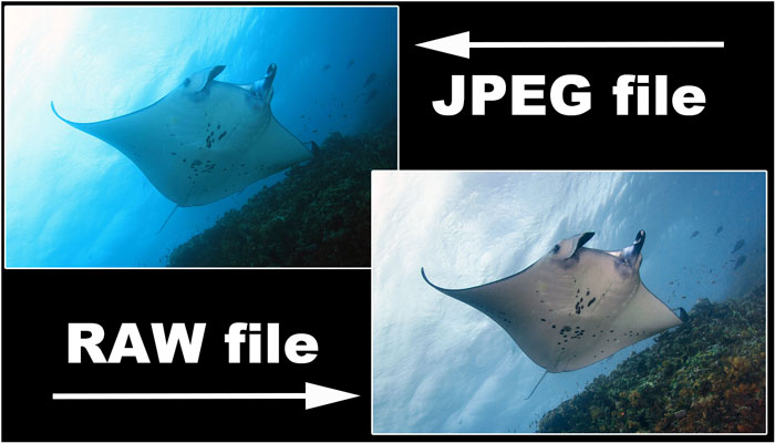 Shooting RAW Files vs. Shooting JPEG Files