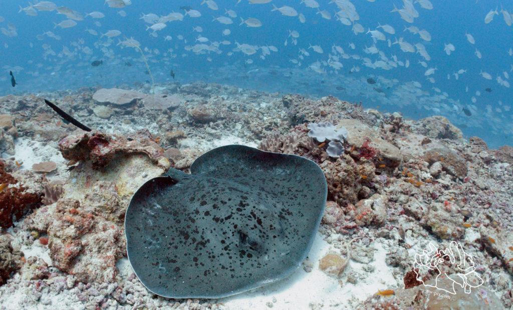 Deep Blue Divers   2019 July Highlights